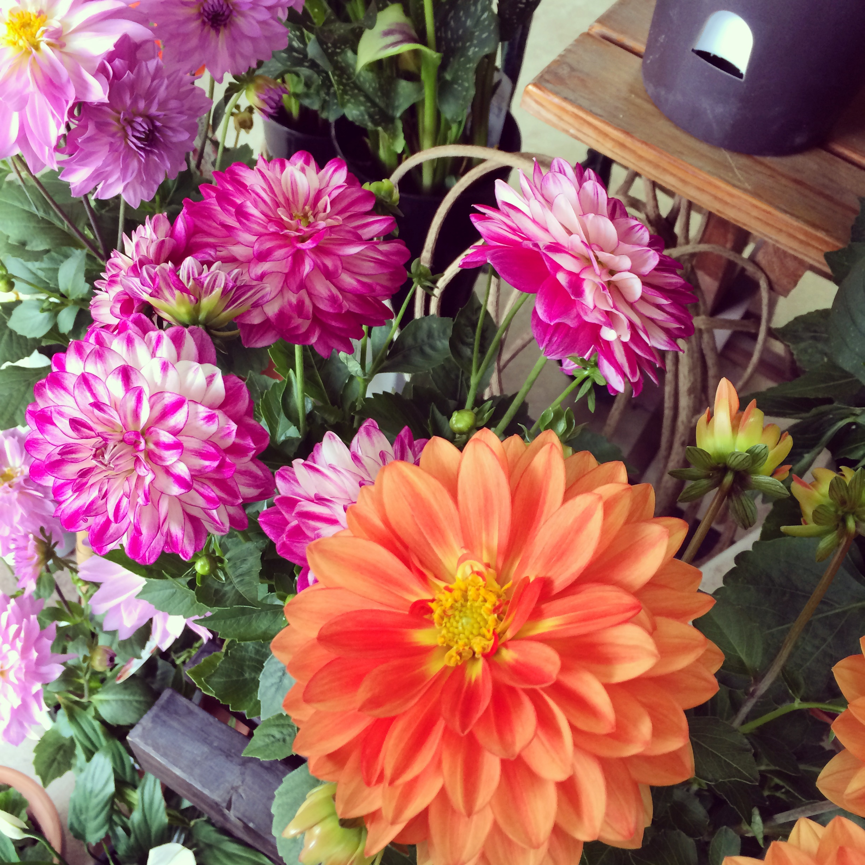 お花のイメージ画